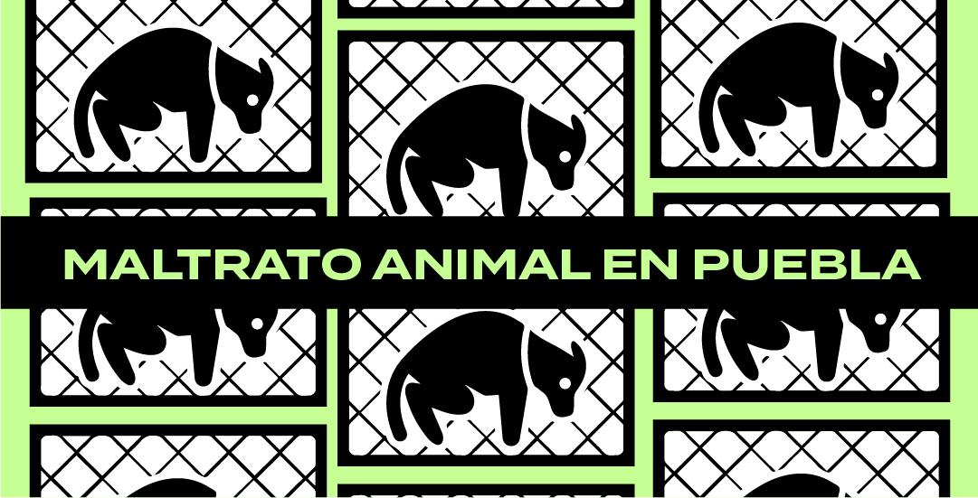 ¿Qué se ha hecho contra el maltrato animal en Puebla?