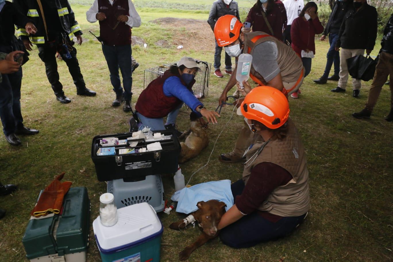 ¡A salvo! los dos perros rescatados del socavón