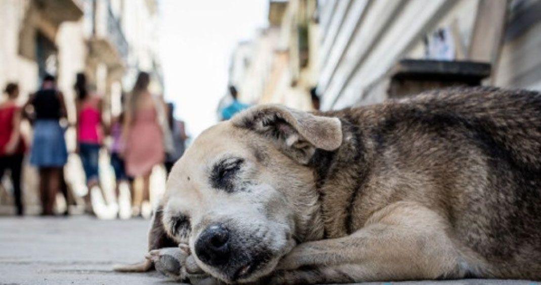 Vigilará Movimiento Animalista de Puebla ejecución de acuerdos electorales