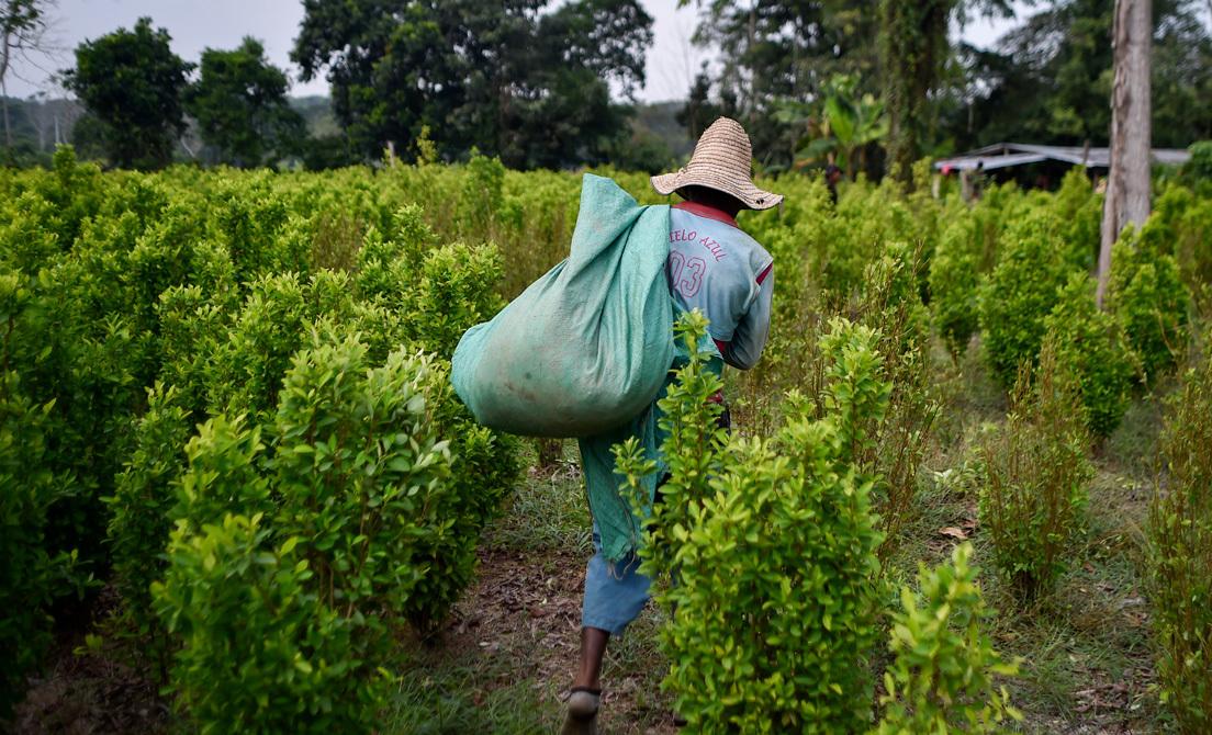 ONU califica nuevamente a Colombia como el primer país productor de cocaína del mundo