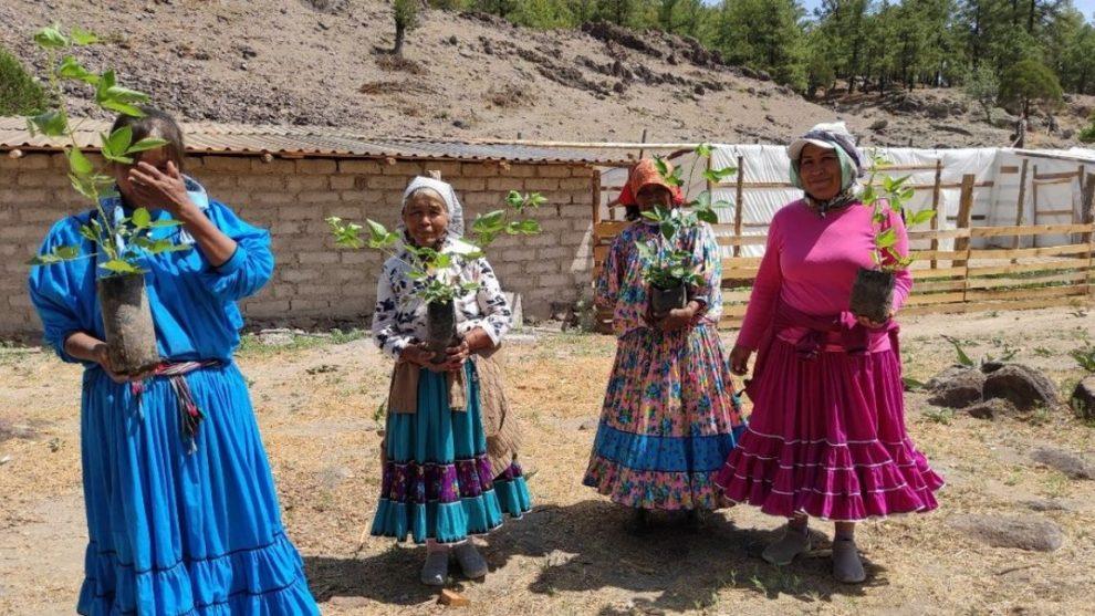 Reforestarán Chihuahua con más de 28 millones de árboles