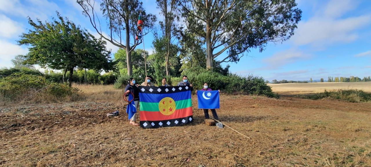Perquenco: Comunidad mapuche recupera control territorial y productivo de un predio de 40 hectáreas