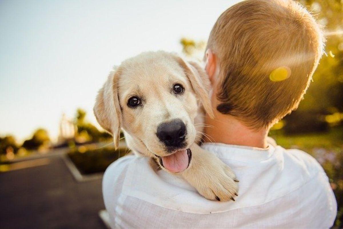 Día Mundial del Perro, un día para apreciar a nuestros amigos peludos