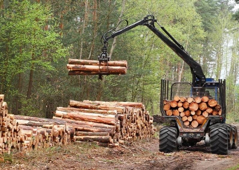 Plantaciones forestales en la mira de la Suprema tras caso de monocultivos en cercanías de Parque Nacional Nonguén