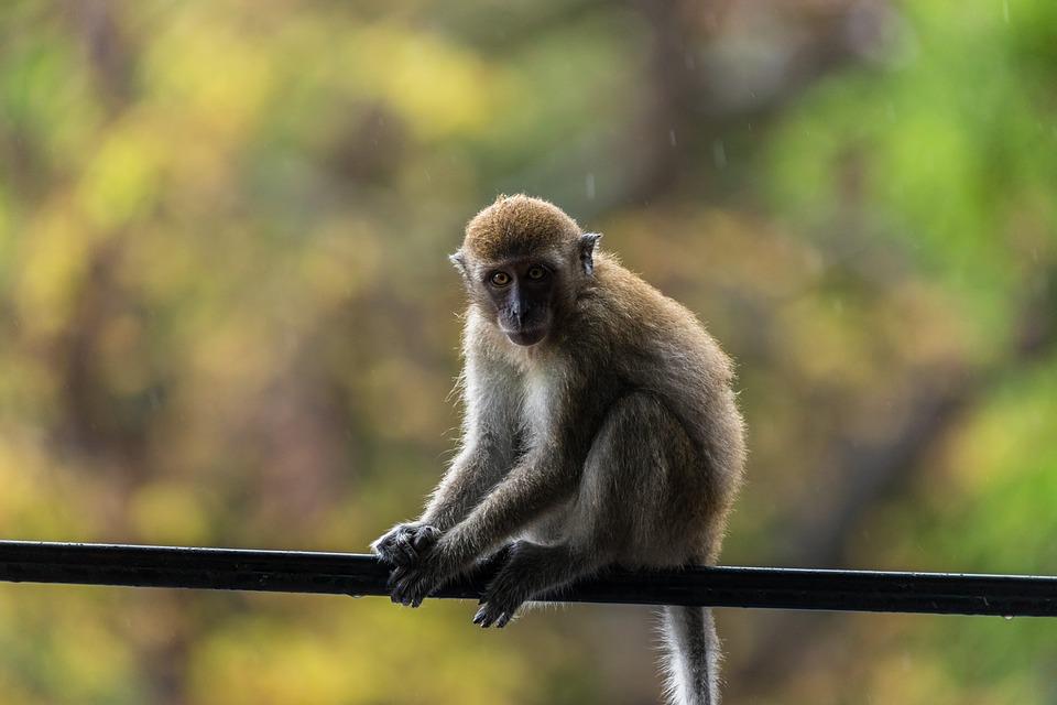 Registran primer caso de viruela de los monos en EE. UU. desde 2003