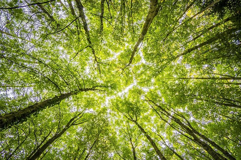 Primer Mercado Nacional de Carbono: ¿Cuál será su contribución para alcanzar la carbono neutralidad?