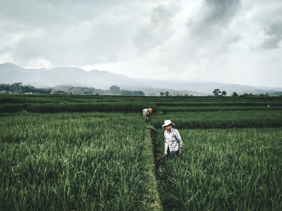 Lxs agricultorxs, no las corporaciones, transformarán el sistema alimentario