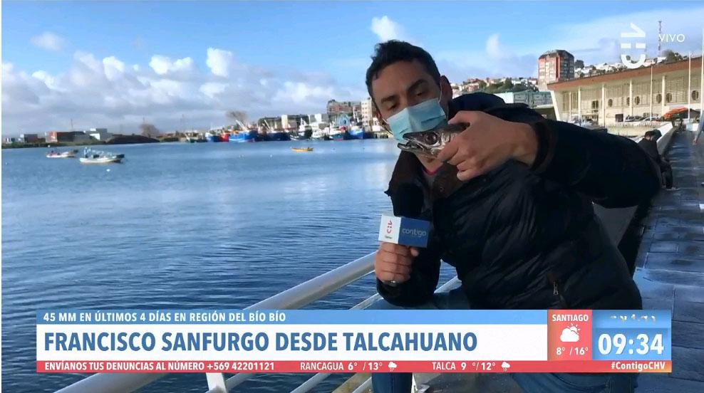 Sernapesca criticó al matinal de Chilevisión por alimentar a un lobo marino en un despacho en vivo: Está prohibido por alterar los hábitos de caza de los animales