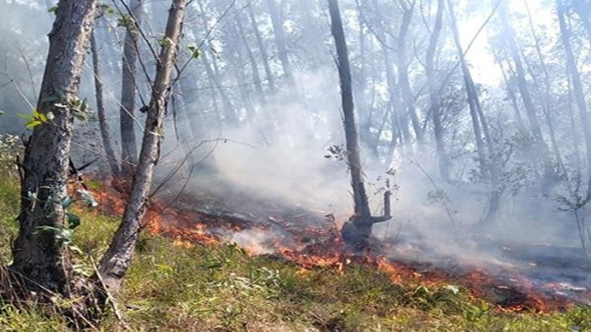 (Video) Comunidad indígena en Brasil se encuentra en riesgo por incendios en Jaraguá