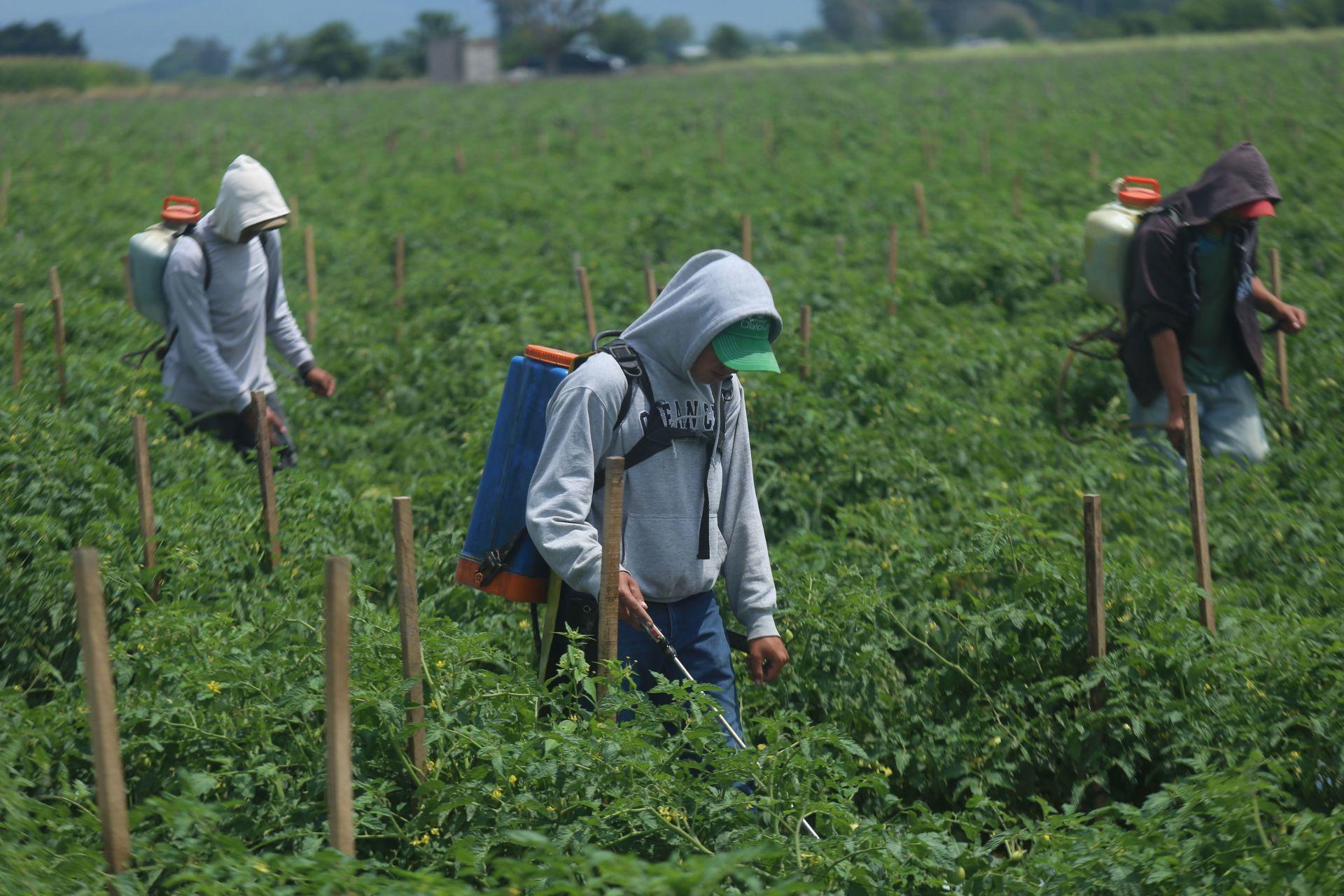 Migrantes sacan de la pobreza a 26 mil poblanos