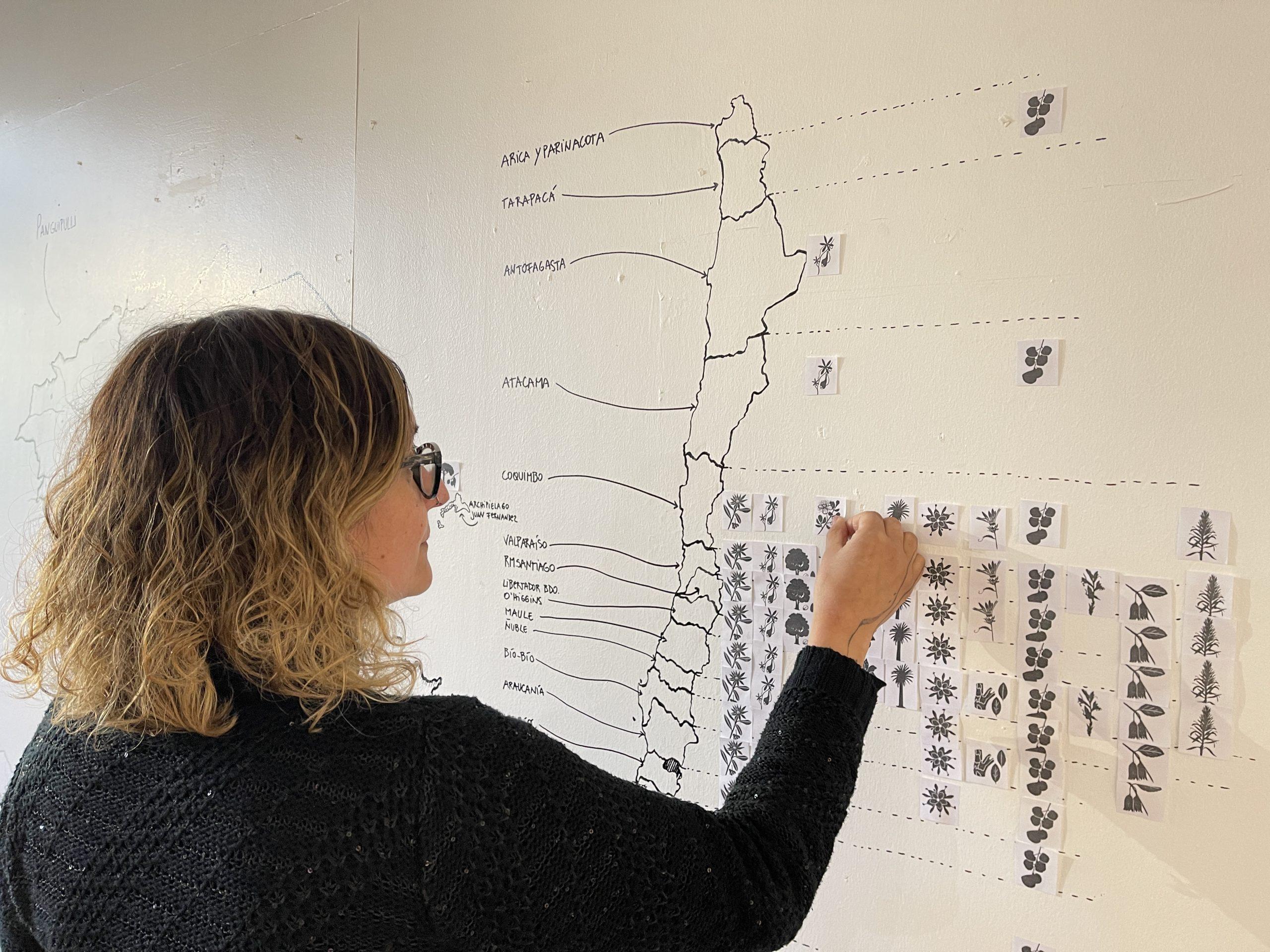 Ilustradora científica Francisca Veas prepara muestra de artes visuales en Casona Cultural de Panguipulli