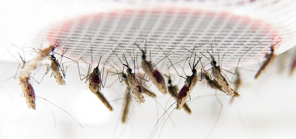 Descubren una forma de malaria resistente al principal fármaco usado en África