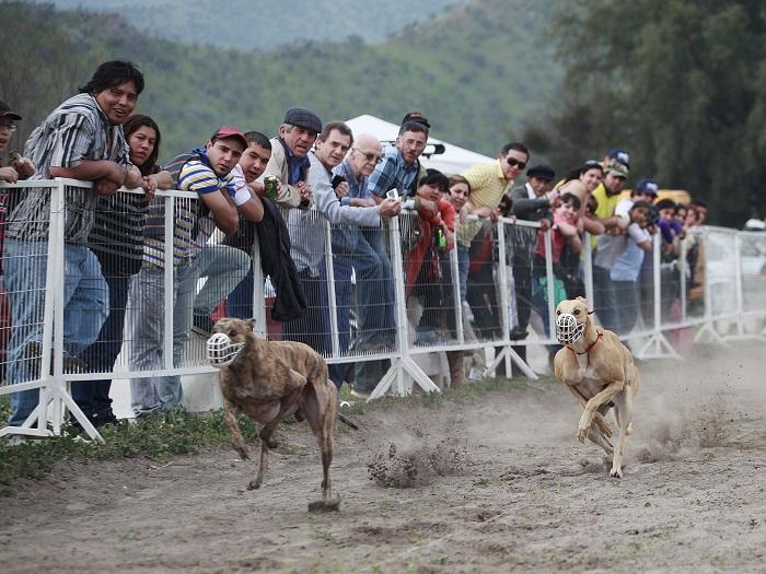 Cámara rechazó proyecto que prohibía las carreras de perros en todo el país
