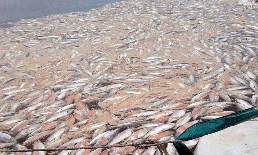 Desestiman sobreseimiento de exdirector de Directemar por vertimiento de 9 mil toneladas de salmones descompuestos frente a las costas de Chiloé en 2016