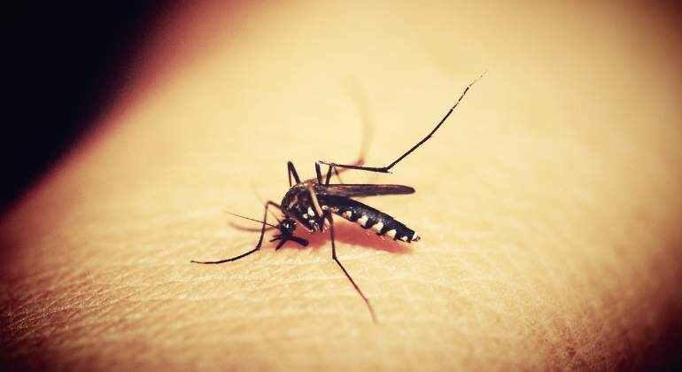 «Momento histórico»: OMS recomienda uso generalizado de primera vacuna contra la malaria