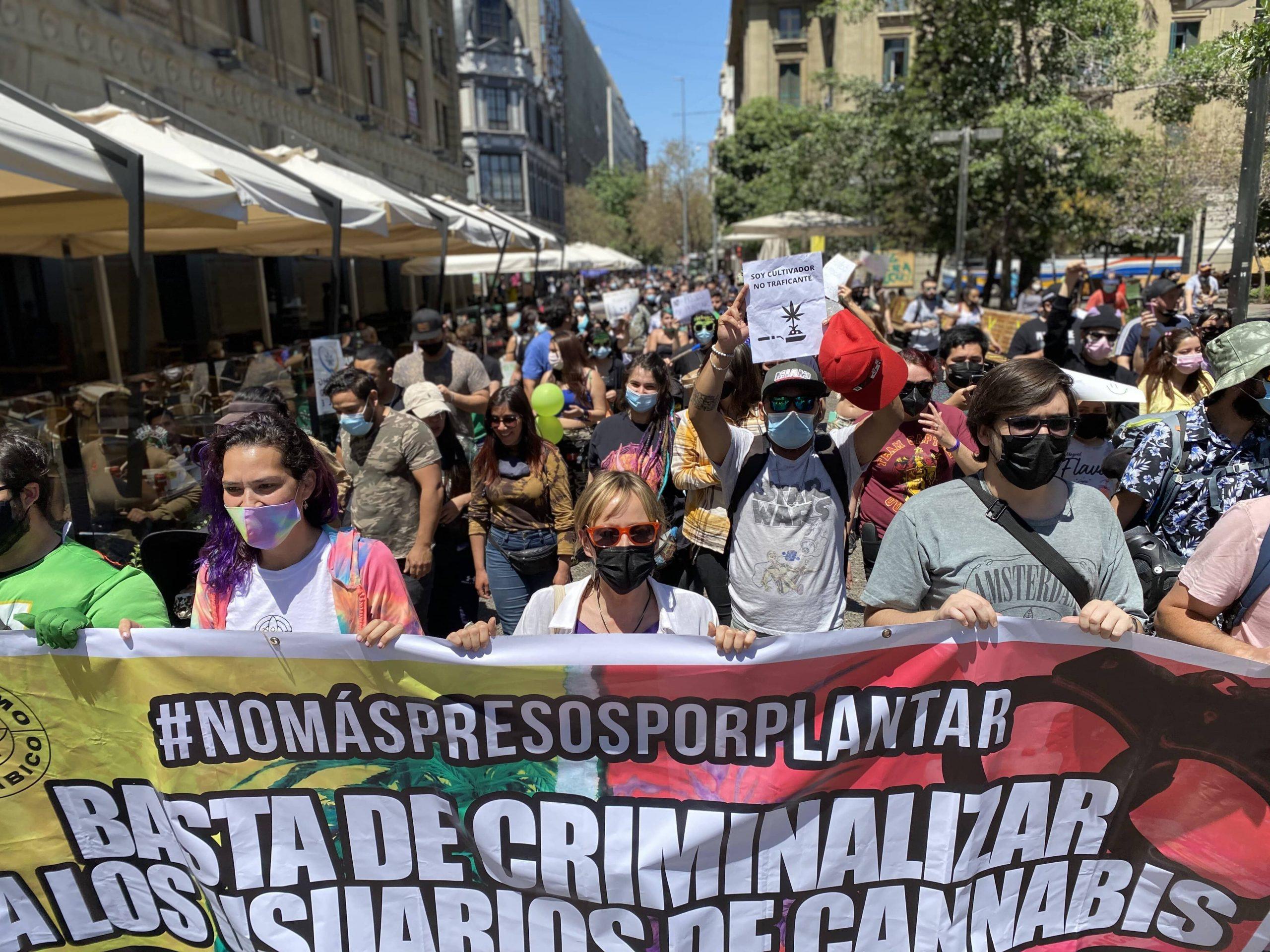 No más presos por plantar: Usuarios y organizaciones exigen terminar con la criminalización del cultivo medicinal de marihuana