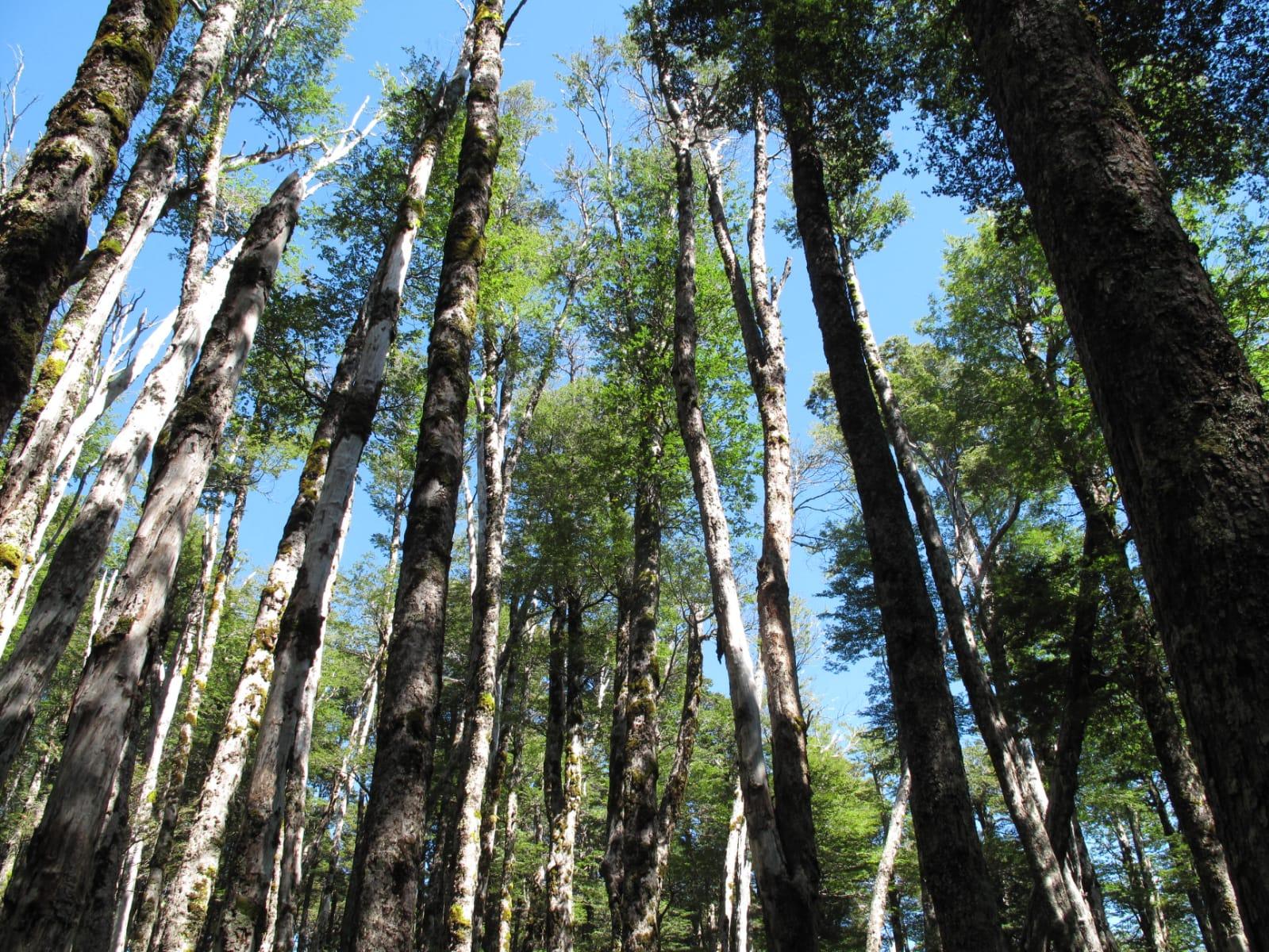 UACh busca ser carbono neutral a través de su propio patrimonio natural