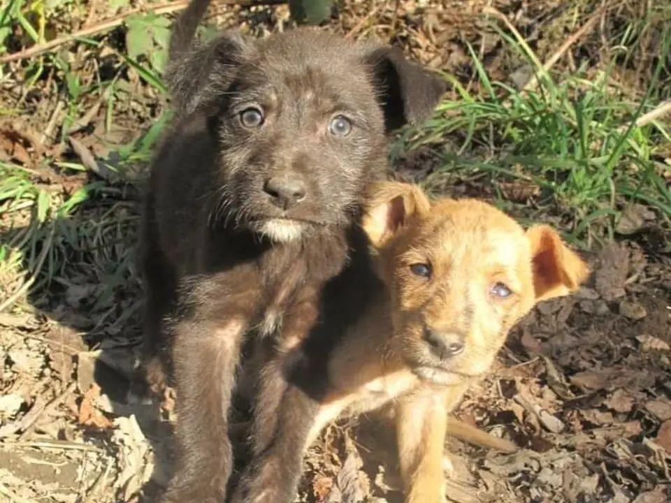 La horrenda masacre canil en Temuco de casi 6 mil perros que sigue sin culpables