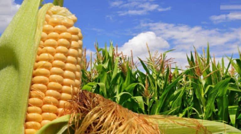 Desarrollo agrario del país cuenta con el apoyo del Gobierno Nacional